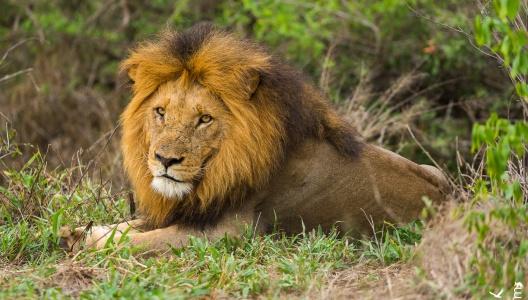 Südafrika 2017/18 – Krüger Nationalpark Mitte