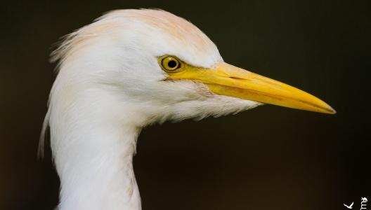 Birding in Gambia und Senegal