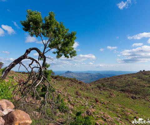 Südafrika 2017/18 – Marakele Nationalpark